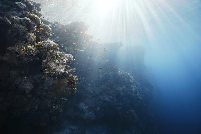 Reef Scene-Alexander Semenov-Photographic Print