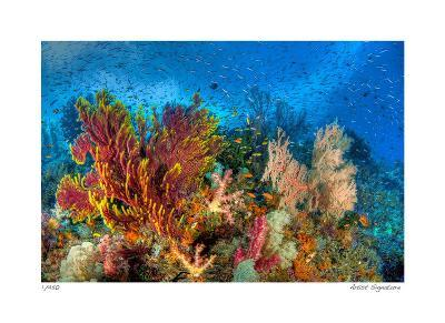 Reef Scenic 3-Jones-Shimlock-Giclee Print