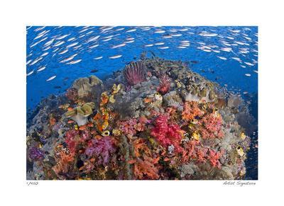 https://imgc.artprintimages.com/img/print/reef-scenic-6_u-l-f583c90.jpg?p=0