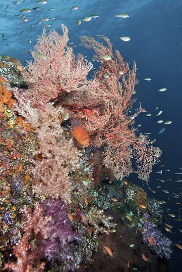 Reef Scenic and Coral Trout-Jones/Shimlock-Secret Sea Visions-Photographic Print