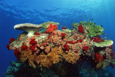 Reef Scenic of Hard Corals , Soft Corals and Tropical Fish , Malaysia-Comstock-Photographic Print