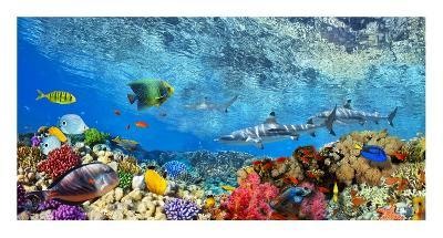 Reef Sharks and fish, Indian Sea-Pangea Images-Giclee Print