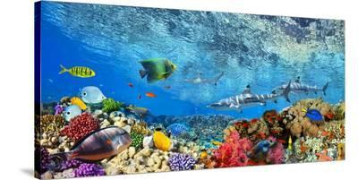 Reef Sharks and fish, Indian Sea-Pangea Images-Stretched Canvas Print