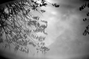 Reflection of Trees B/W