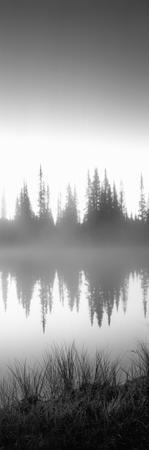 Reflection of Trees in a Lake, Mt Rainier, Mt Rainier National Park, Pierce County