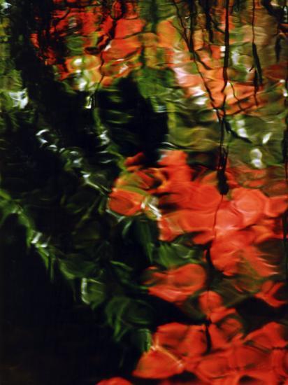 Reflections in the West Fork of Oak Creek, Sedona, Arizona, USA-Margaret L. Jackson-Photographic Print