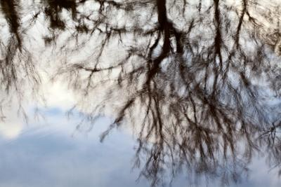https://imgc.artprintimages.com/img/print/reflections-of-trees-in-water_u-l-pz0hvc0.jpg?p=0