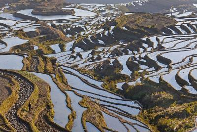 Reflections Off Water Filled Rice Terraces, Yuanyang, Honghe, China-Peter Adams-Photographic Print