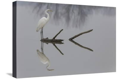 Reflections-Mauro Montuori-Stretched Canvas Print