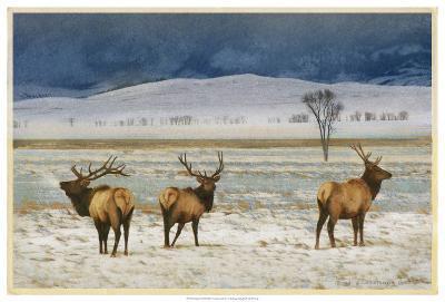 Refuge Elk-Chris Vest-Art Print