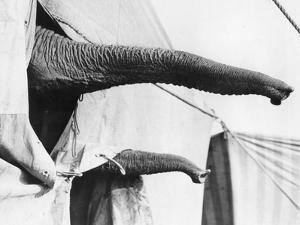 Elephant Trunks by Reg Speller