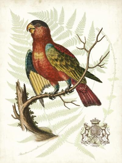 Regal Parrots II-Vision Studio-Art Print