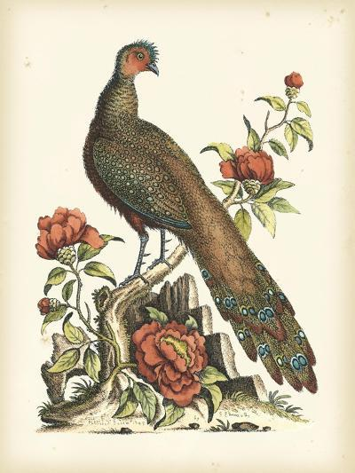 Regal Pheasants III-George Edwards-Art Print