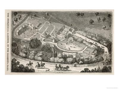 Regent's Park London: a Bird's Eye View of the Gardens of the Zoological Society-I. Dodd-Giclee Print