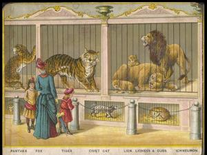 Regent's Park Zoo London Visitors Admire Lions Tigers and Other Cats