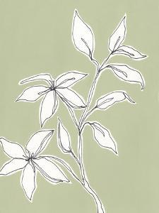 Botanic Drawing I by Regina Moore