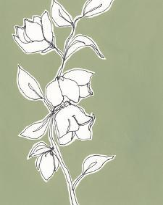Botanic Drawing II by Regina Moore