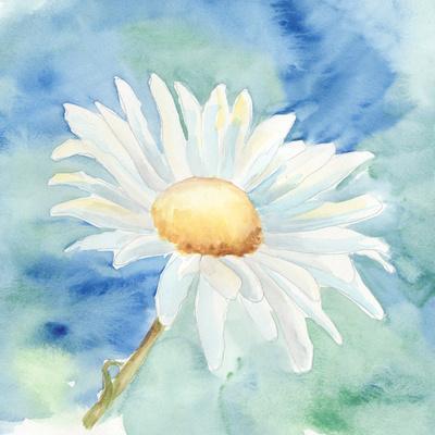 Daisy Sunshine II