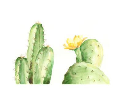 Spiny Desert Plants II