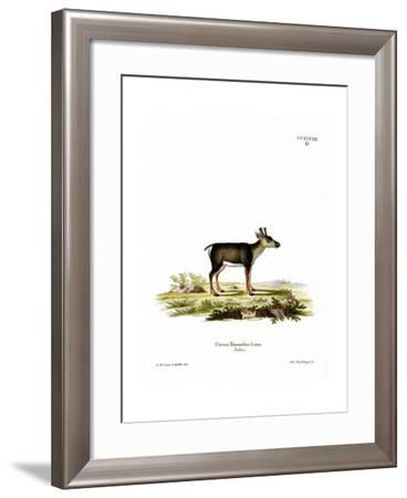 Reindeer Fawn--Framed Giclee Print