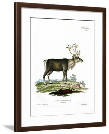 Reindeer--Framed Giclee Print