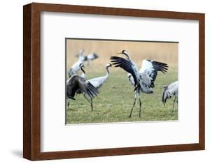 Cranes by Reiner Bernhardt