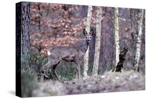 Deers in Spring by Reiner Bernhardt