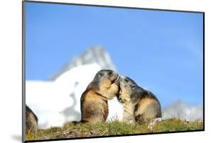 Groundhogs, Two, at the Side by Reiner Bernhardt
