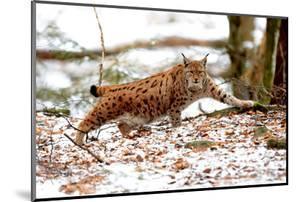 Lynx by Reiner Bernhardt