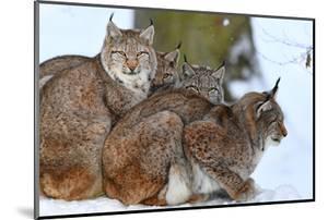 Lynxes in Winter by Reiner Bernhardt