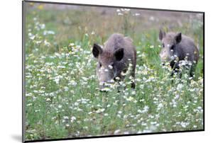 Meadow, Wild Boars, Making a Mess by Reiner Bernhardt