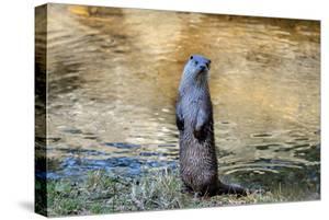 Otter by Reiner Bernhardt