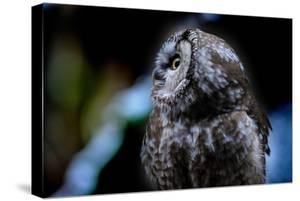 Owl by Reiner Bernhardt