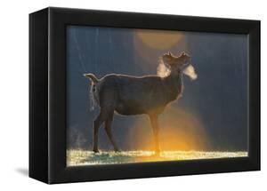 Red Deer, Red Deer in the Phloem Antlers by Reiner Bernhardt
