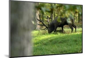 Red Deer Rut by Reiner Bernhardt