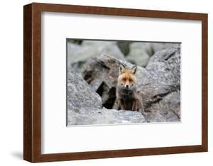 Red Fox by Reiner Bernhardt