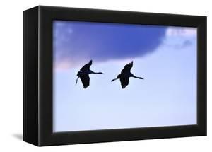 Two Cranes in the Flight by Reiner Bernhardt
