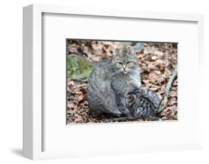 Wildcat with Offspring by Reiner Bernhardt