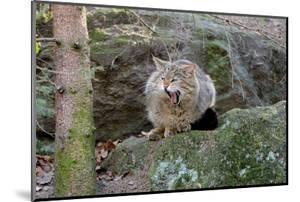 Wildcat by Reiner Bernhardt