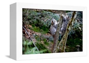 Wildcats, Young Animals Climb on a Tree by Reiner Bernhardt