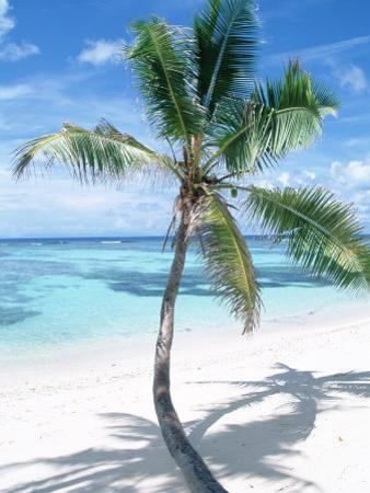 Beach with Coconut Palm (Cocos Nucifera) La Digue, Seychelles by Reinhard