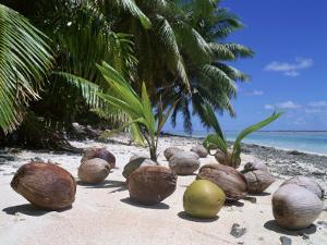 Coconut Palm Seedlings (Cocos Nucifera) on Tropical Beach, Seychelles by Reinhard