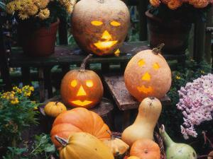 Different Kinds of Pumpkin and Pumpkin Faces at Halloween (Cucurbita Sp.) by Reinhard