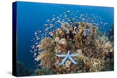 Colorful Coral Reef, Alam Batu, Bali, Indonesia