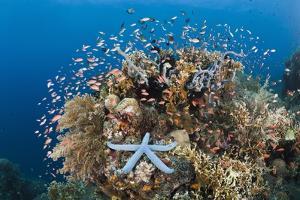 Colorful Coral Reef, Alam Batu, Bali, Indonesia by Reinhard Dirscherl
