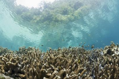 Coral Reef in Risong Bay, Micronesia, Palau by Reinhard Dirscherl