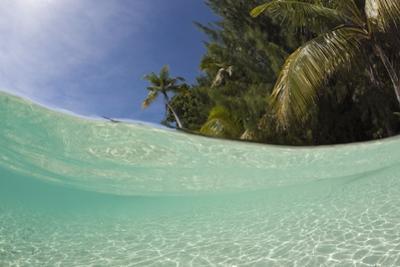 Lagoon and Palm-Lined Beach, Micronesia, Palau by Reinhard Dirscherl