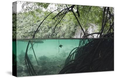 Mangroves Trees above and Underwater