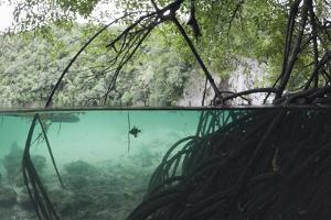 Mangroves Trees above and Underwater by Reinhard Dirscherl