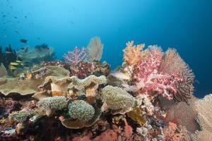Very Varied Coral Reef, Florida Islands, the Solomon Islands by Reinhard Dirscherl